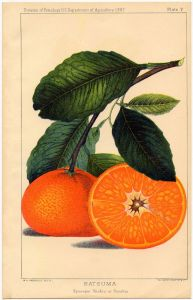 happy-birthday-mrs-wilder-oranges-image
